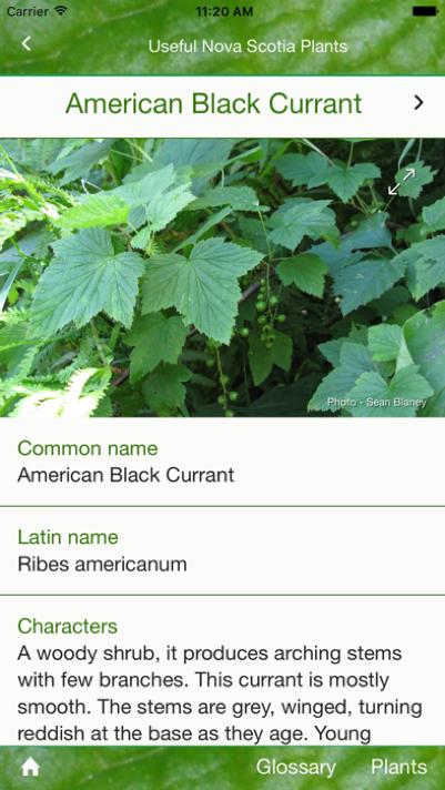 Useful Nova Scotia Plants